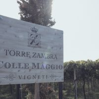 Torre Zambra_vineyards 2